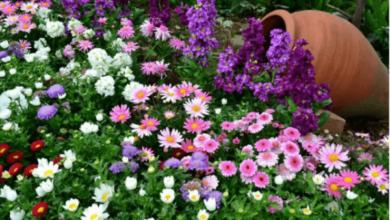 Photo of Двулетние цветы, которые украсят дачу