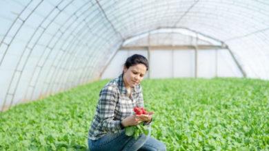 Photo of Секреты раннего урожая. Сеем редис и зелень в теплице