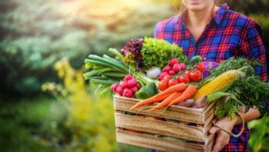 Photo of Наш эксклюзивный урожай. Как вырастить деликатесные неприхотливые культуры?