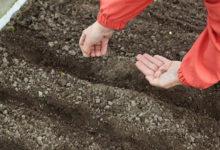 Photo of Время первых. Какие холодостойкие овощи можно сеять ранней весной