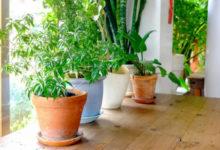 Photo of Адаптация комнатных растений после покупки