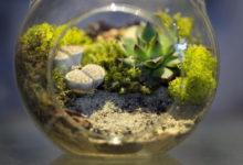 Photo of Выбираем растения для флорариума