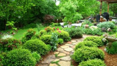 Photo of Как сделать красивый сад своими руками