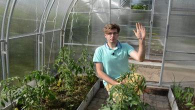 Photo of Формирование томатов: удаляем пасынки и листья правильно