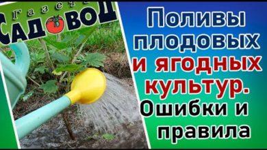 Photo of Поливы плодовых и ягодных культур. Ошибки и правила