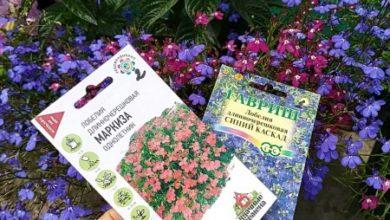 Photo of Однолетние цветы — сравнивнение с фото на пакетиках семян