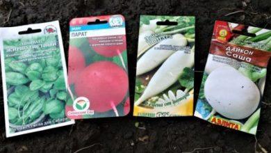 Photo of Что посеять после чеснока в конце июля и собрать второй урожай