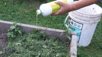 Photo of Дополнительная подпитка. Чем подкормить растения в первый месяц лета?
