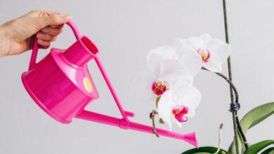 Photo of Как поливать орхидею в домашних условиях?