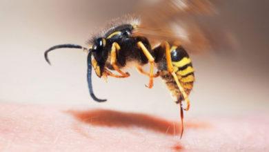 Photo of Что делать при укусе осы