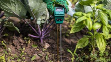 Photo of Как регулировать кислотность почвы и выращивать здоровые растения?