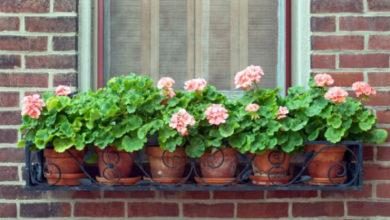 Photo of Цветы за окном квартиры