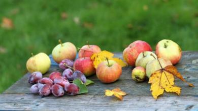 Photo of Лунный календарь садовода и огородника на сентябрь 2021